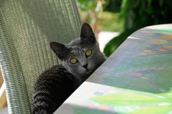 Katzen 24
