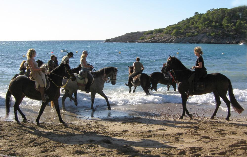 Pferde 20