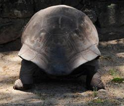 Schildkröten_2