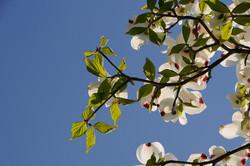 Baum 11