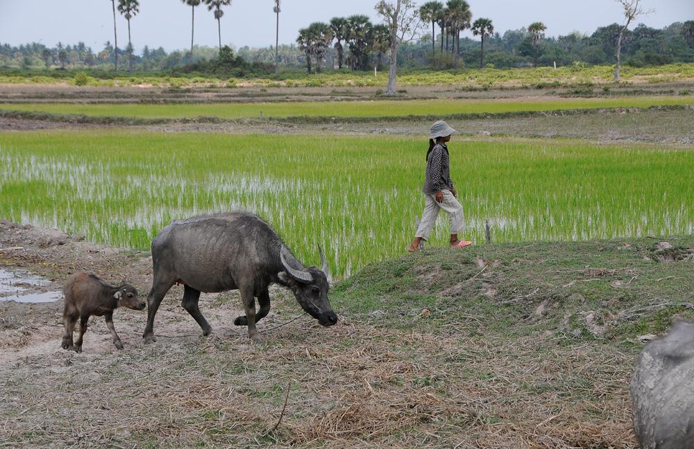 Kambodscha 26