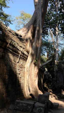 41 Angkor Wat