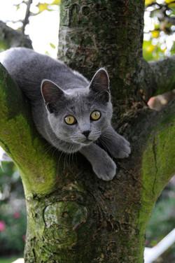 Katzen 10