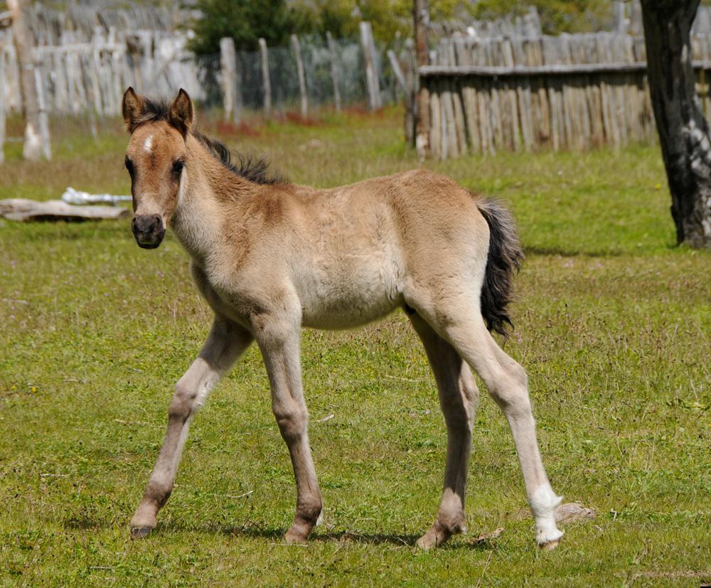 Pferde 16
