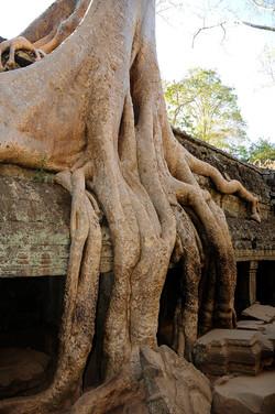 44 Angkor Wat