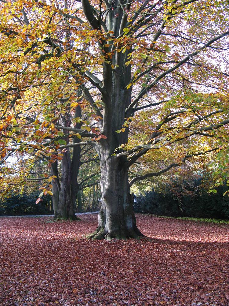 Baum 5