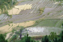 Bhutan 64