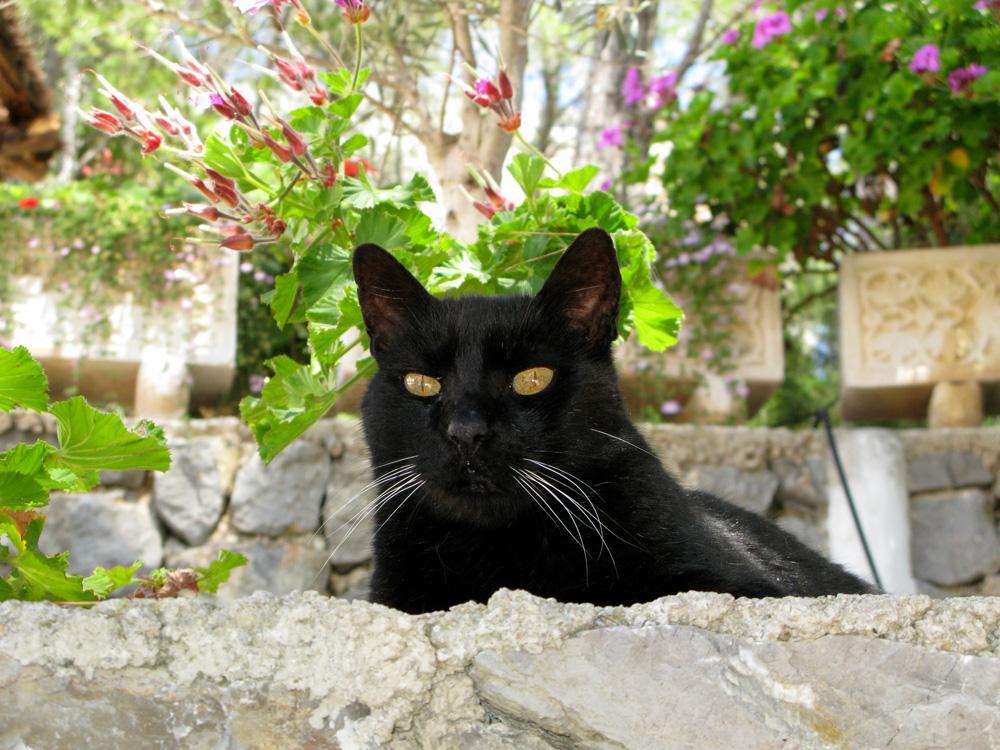 Katzen 14