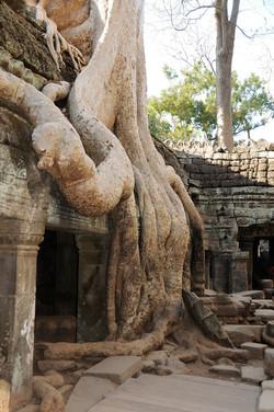 42 Angkor Wat