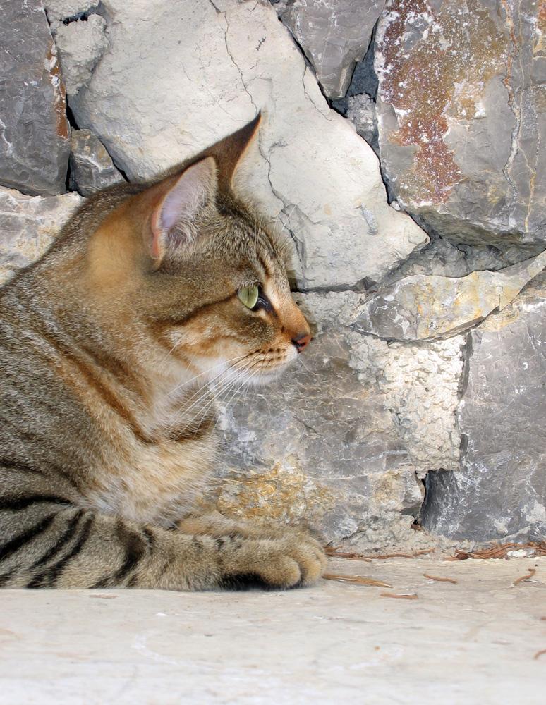 Katzen 16