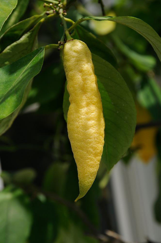 Früchte 3