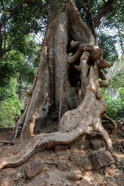 48 Angkor Wat