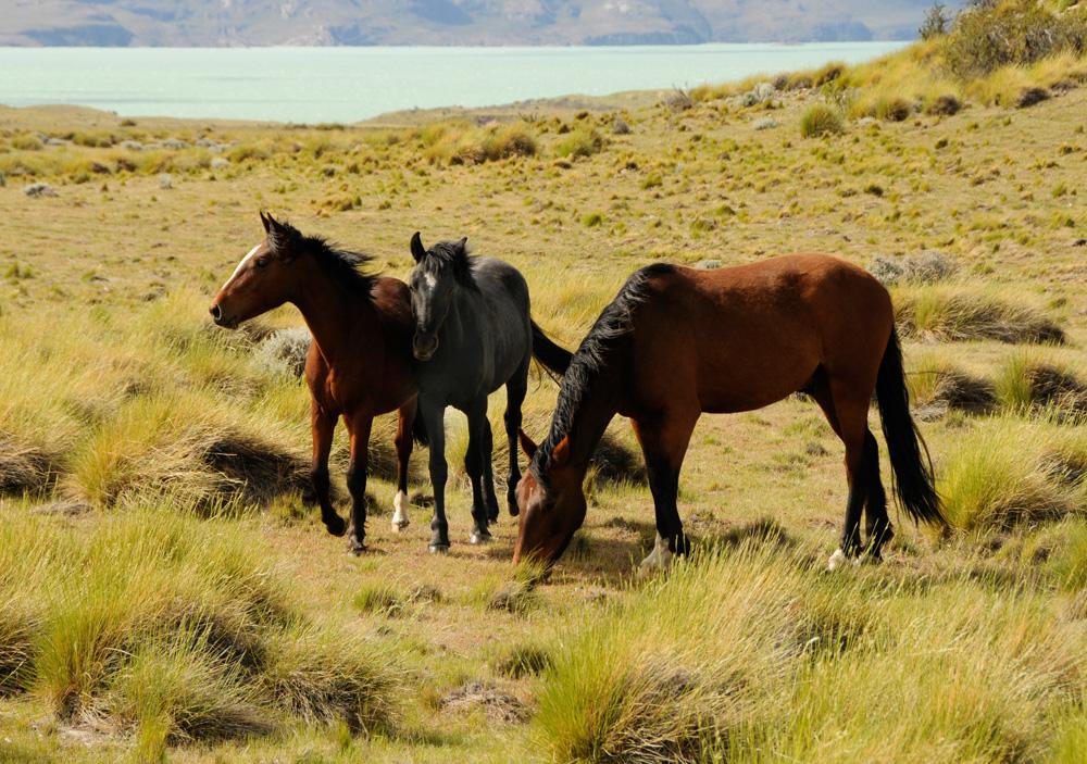 Pferde 9