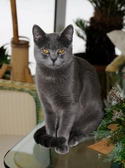 Katzen 21