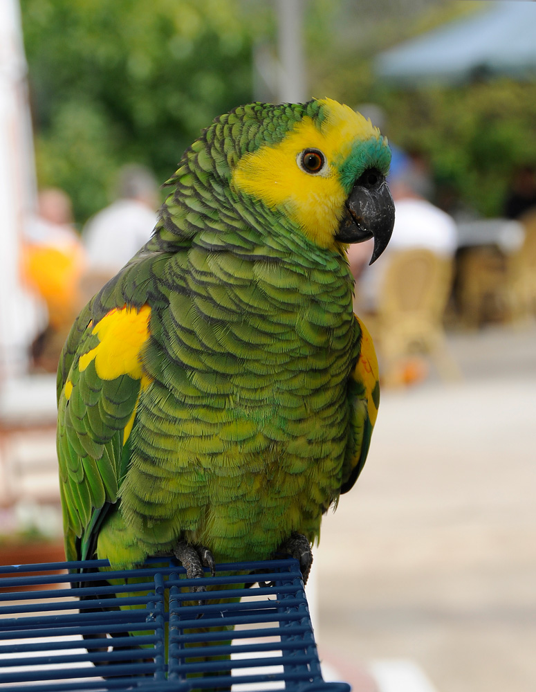 Vögel 11
