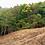 Thumbnail: Hectare+ Lots in San Salvador