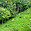 Thumbnail: 12 Hectares w Quebrada, Springs, Views in La Palma