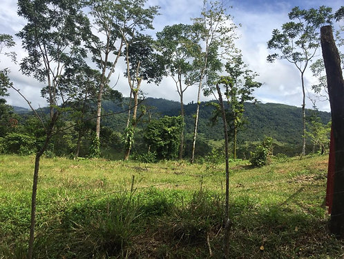 5 Lots Available in ALFOMBRA