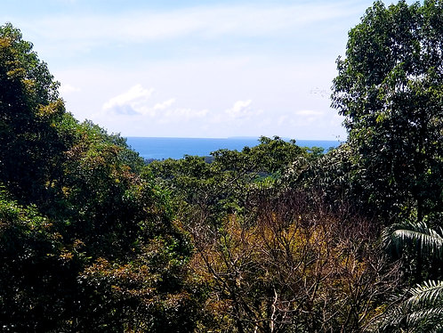 1.3 Hectare in Uvita with 5 Plantels - Paraiso Escondido