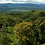 Thumbnail: Villa Colon- 112 Acres (45.4 Ha) in Palmar Norte