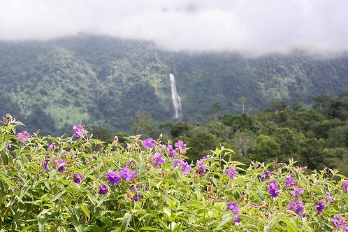 1.5 Acres w/ Line-Of-Sight Diamante View, Fruit Trees, Greenhouse, Quebrada