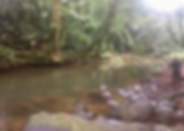 23 Hectares on River Flowing From Nauyaca