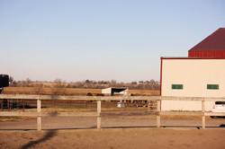 View into paddocks