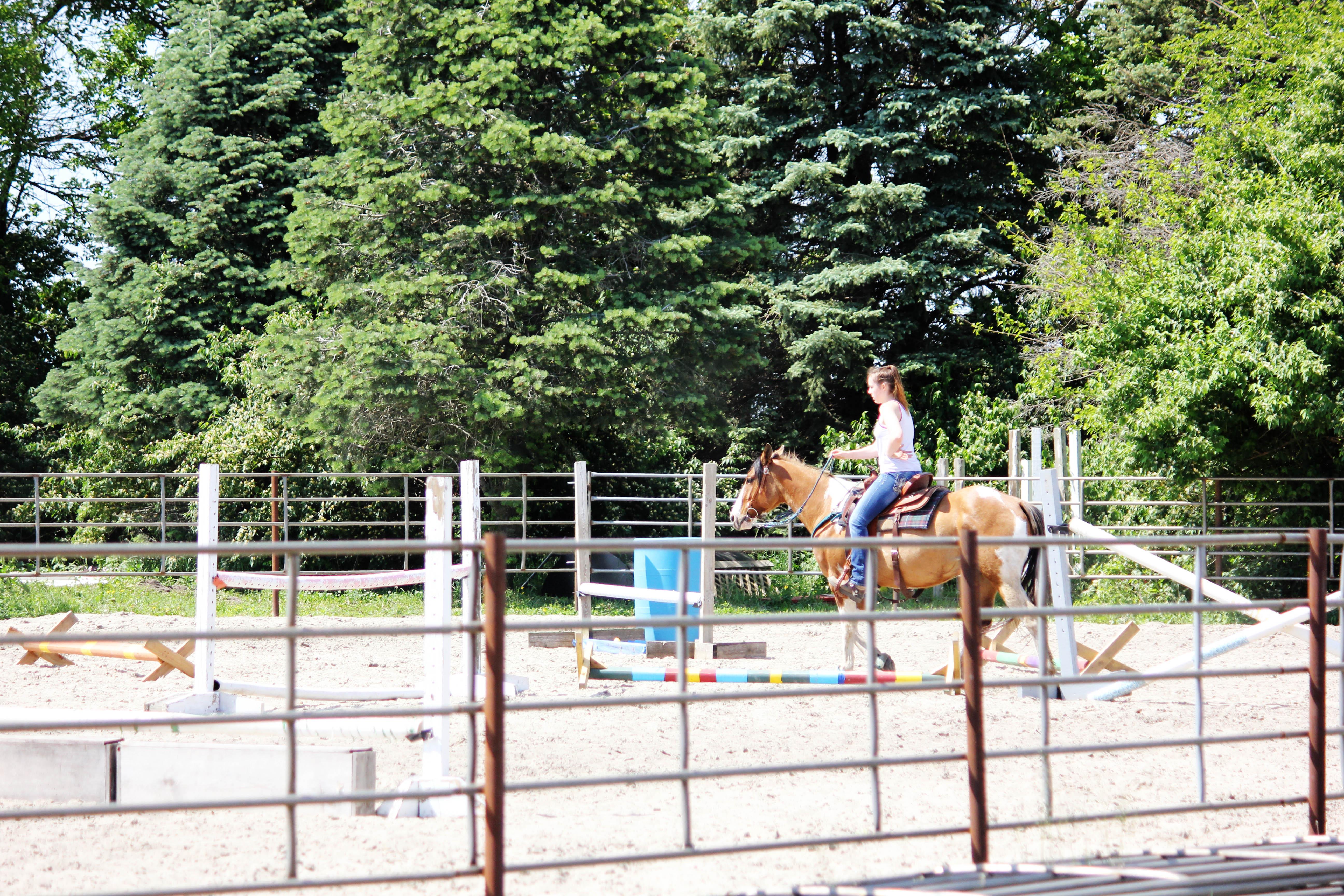 Practice & Goals | Horse Boarding