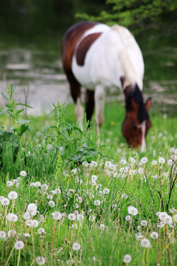 Dream for a horse | Horse Boarding
