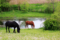 Pine Hollow Pasture | Horse Boarding