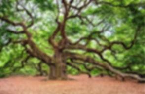 oak-tree-2018822_1920.jpg