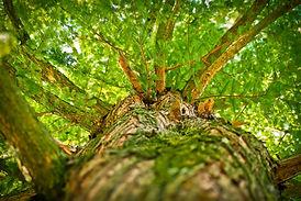tree-1750784.jpg