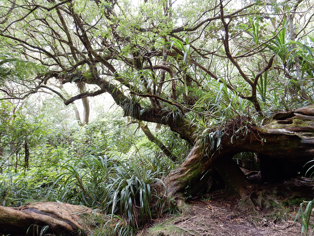 Primary rainforest covers the interior of Reunion Island