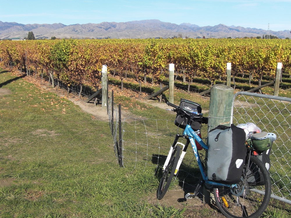 Welcome respite in Marlborough whilst cycling self-supported down New Zealand