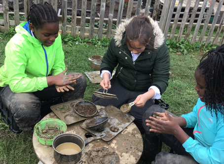 Forest School - Weekly roundup