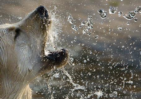 Hidratação de Pets: saiba quais os cuidados indispensáveis para manter a saúde do seu animal