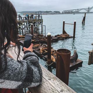 discover-newport-oregon-bay-front-sea-lions.jpg