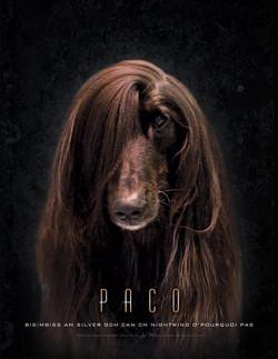 Paco.jpg