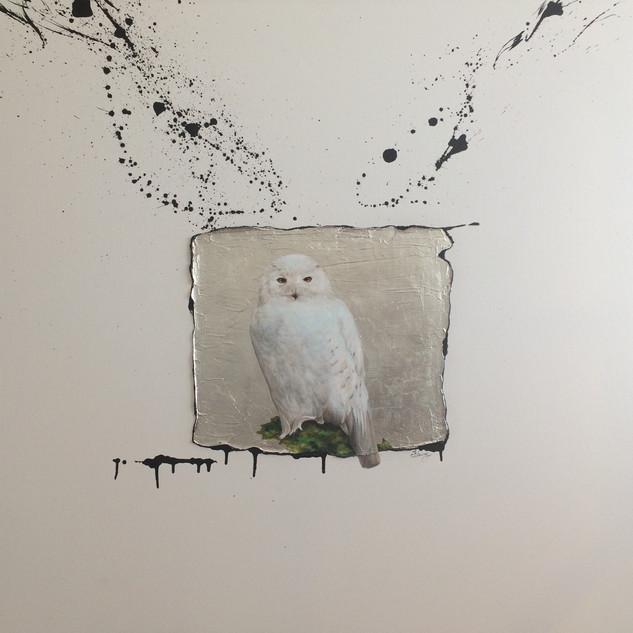 SNOW OWL 1 (STILL)