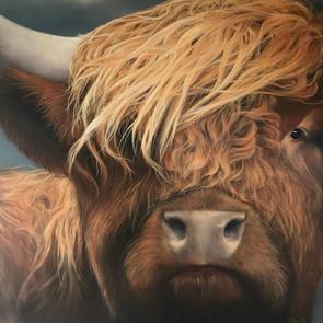 portrait de boeuf Highland