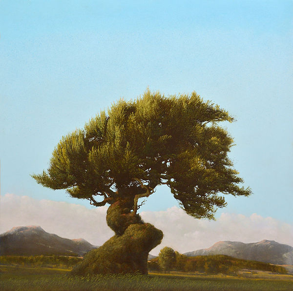 Vecchio Ulivo, 36x36 inches, oil,by Robert Marchessault