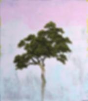 Aristata-48x42.jpg