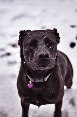 Photography Dog.jpg