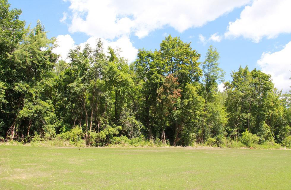 Parkside-Woods