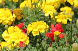 Parkside-Exterior-Flowers
