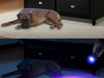 UV light: Some Uses You Might Not Know.