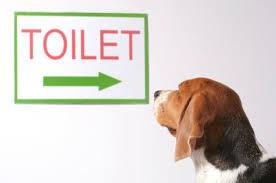 7 Housebreaking Tips For Dogs