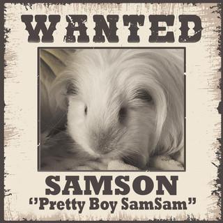 Wanted - Samson.jpg