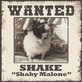 Wanted - Shake.jpg