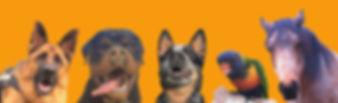 DogTraining
